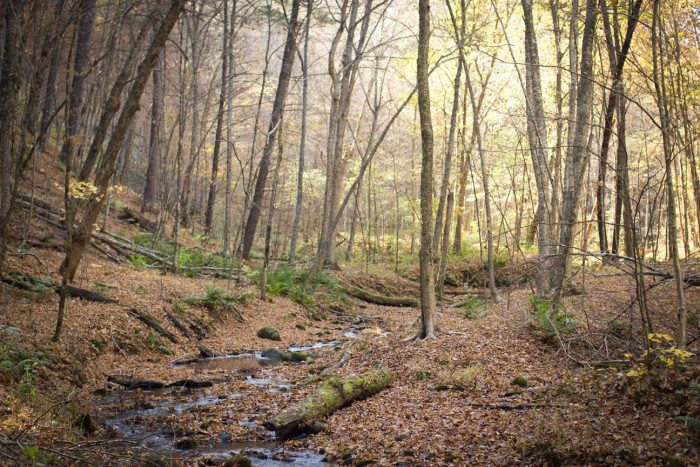 5. At Falls Creek SNA, you can hike cross country or follow thin trails into the wooded ravines and stream beds near the St. Croix.
