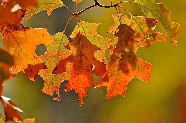 12. They will definitely want to take you on tons of fall walks to watch the leaves change.