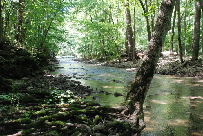 It's a 752-acre park that features a limestone gorge cut by the Little Miami Scenic River, which is approximately one mile from Yellow Springs. Visitors can camp, fish, rock climb, rappel and mountain bike here.