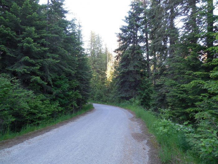This stretch of the original Mullan Road is preserved as a nature trail, leading to where the Mullan Tree once stood.