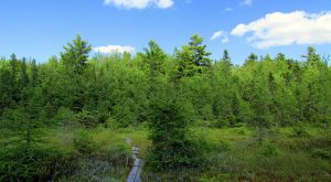 These 9 Trails in New Hampshire Will Lead You to Unforgettable Places