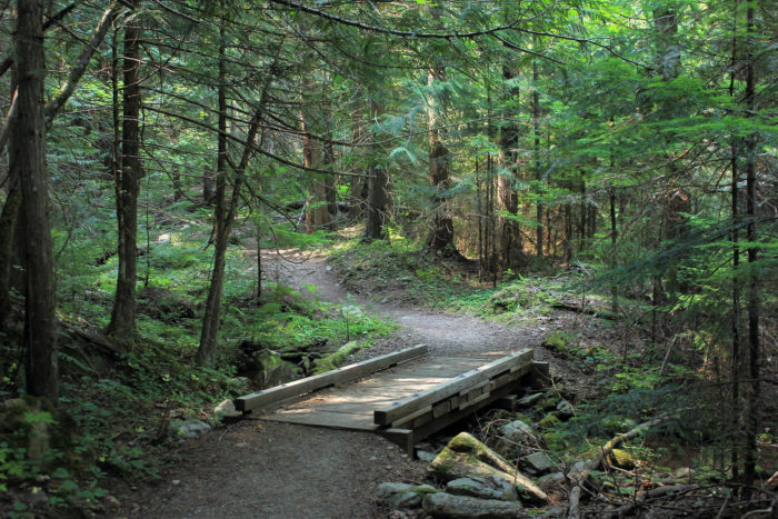 7. Or get yourself lost in a lush backwoods hike.