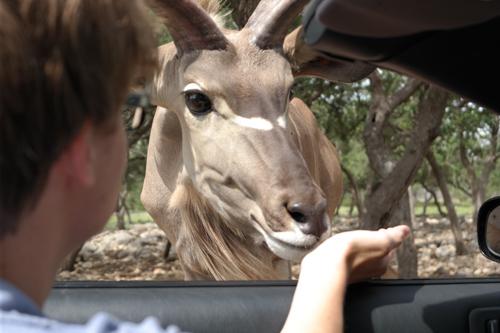 3. Going on an African safari...right here in Texas! (San Antonio)