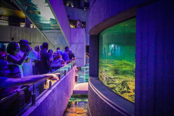17. Explore undersea worlds at the National Aquarium.