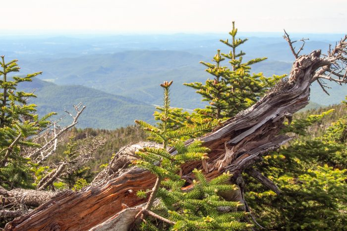 Whether you're at the top or at one of the many lookouts along the way...