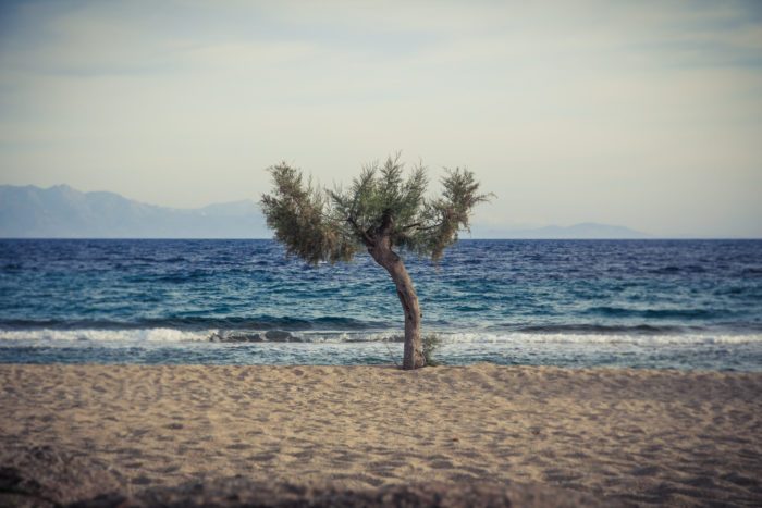 6. Sometimes trees defy nature and fuck up everyone's beach plans by getting in the way. GET|OUT TREE.