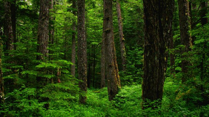 If the urge to explore takes over, check out the Roosevelt Cedar Grove in nearby Nordman.