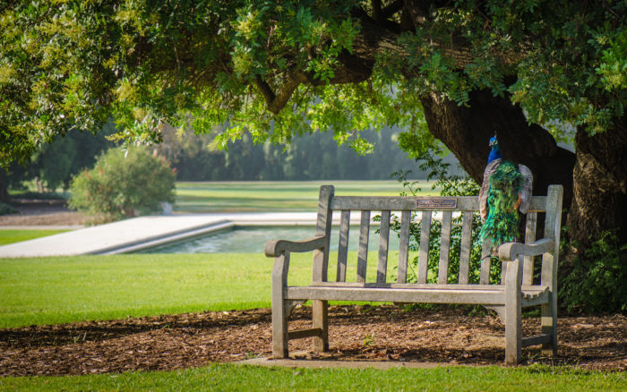 10. Los Angeles County Arboretum and Botanical Garden