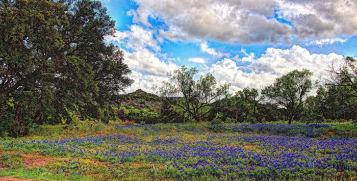 2. And spring just wouldn't be the same without the familiar sight of bluebonnets lining the highway as far as the eye can see.