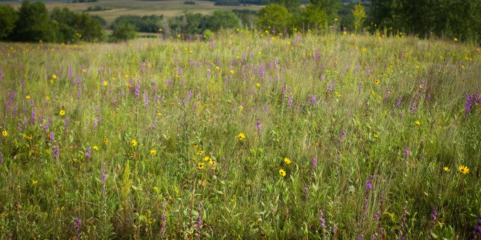 7. Frenchman's Bluff SNA has a trail that will show you the beauty of the MN tallgrass prairie. It's worth exploring this small protected area for the seclusion it offers.