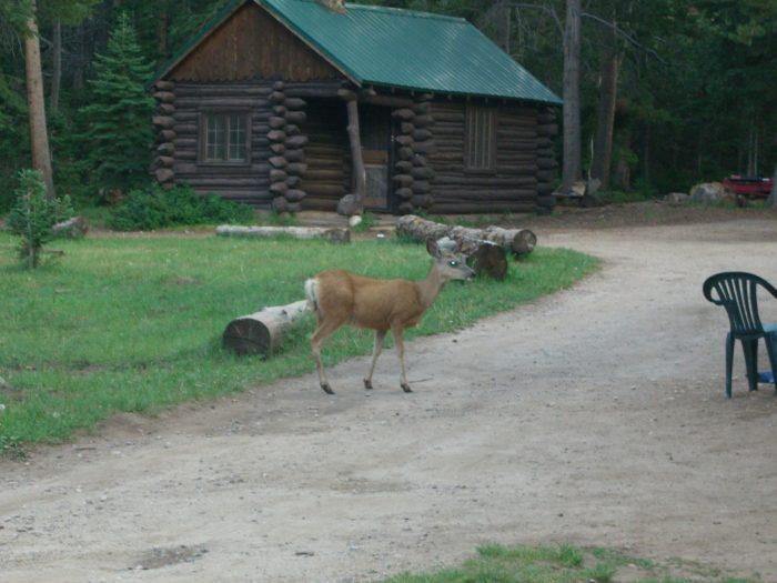 5. Louis Lake Lodge