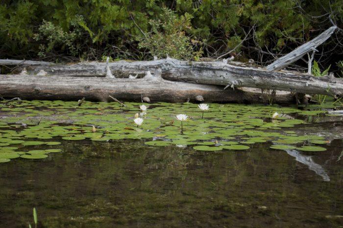 18. Aroostook State Park, Presque Isle
