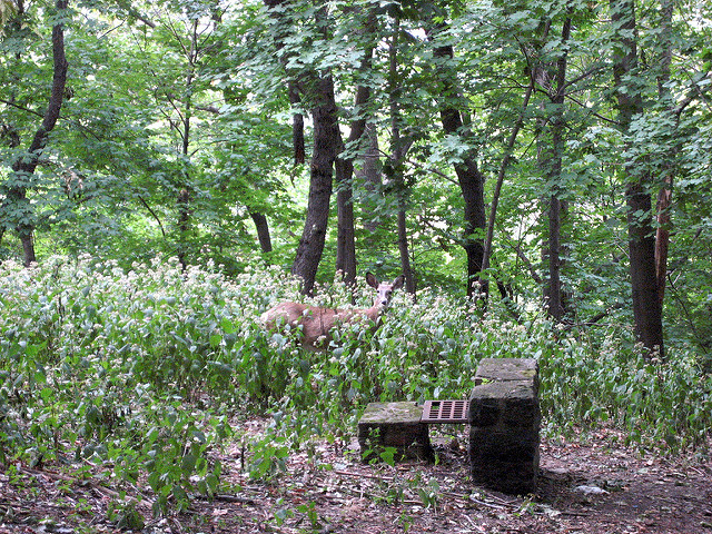 Raise your phone/camera and shoot  photos of the majestic wildlife hiding among the park's plants and trees.