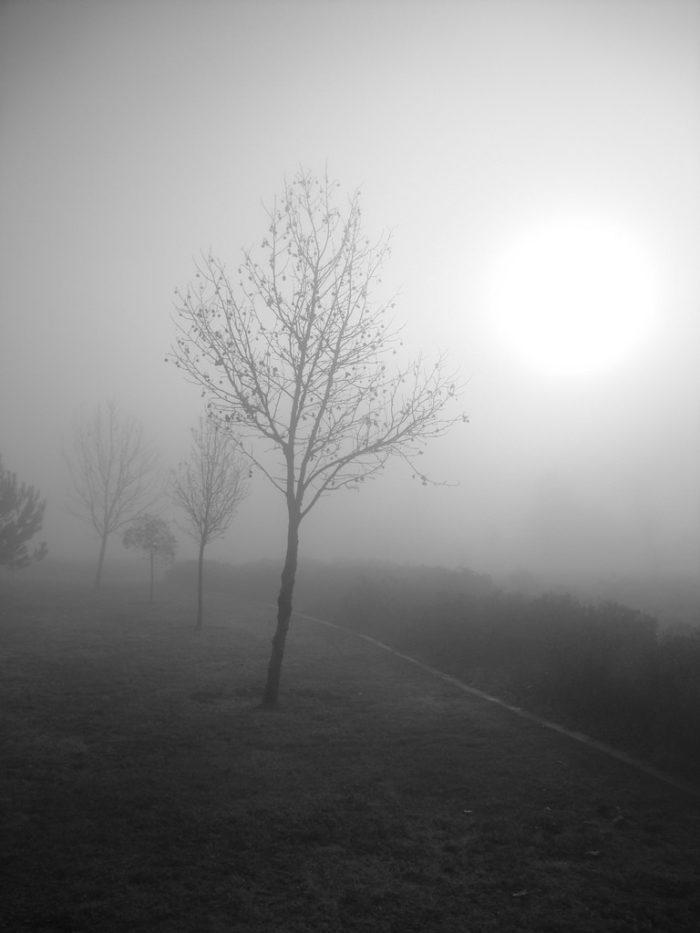 2. Blue Mist/Myst Road
