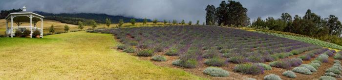 2. Ali'i Kula Lavender Farm