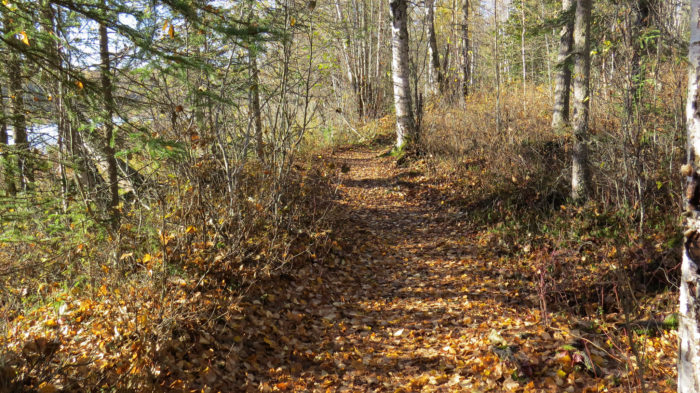 11. Woods near Chugiak, Alaska