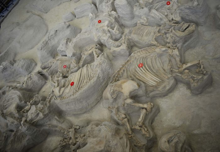 1. We've got natural history covered at Ashfall Fossil Beds.