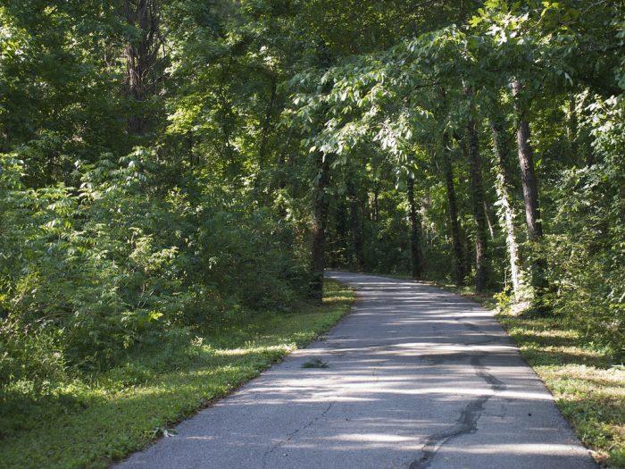 7) Biking Down Tammany Trace