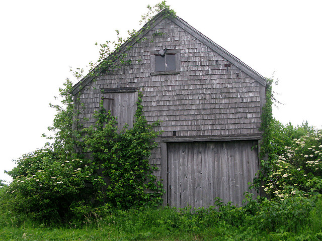 20. The vegetation traveling up this old barn makes for a gorgeous picture.