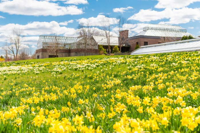 The grounds of the gardens are carpeted with stunning daffodils. Tulip fields are also just around the corner.