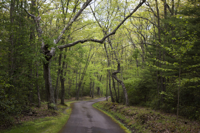 8. Greenbriar State Forest, West Virginia