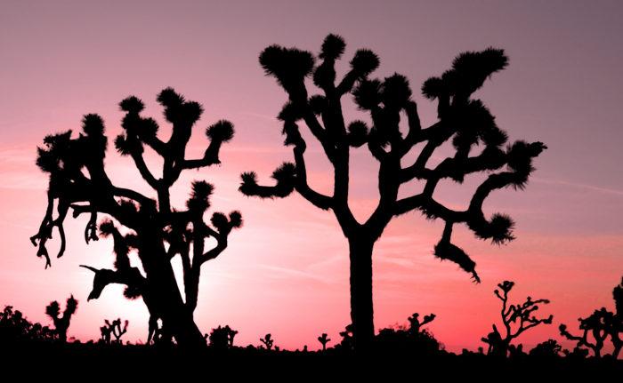 4. Joshua Tree