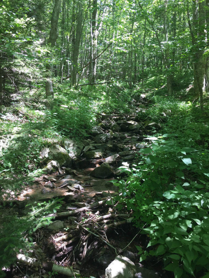 6. Cabin Creek Trail (Mouth of Wilson)