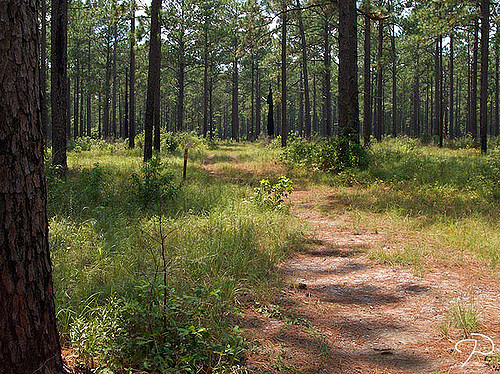 10. Kisatchie National Forest, Louisiana
