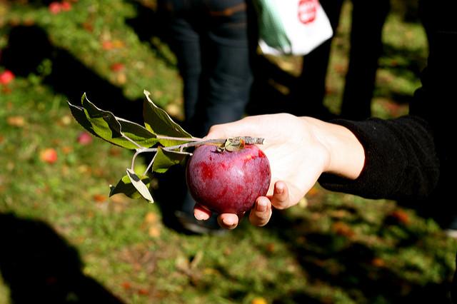 8. Go apple picking in October.