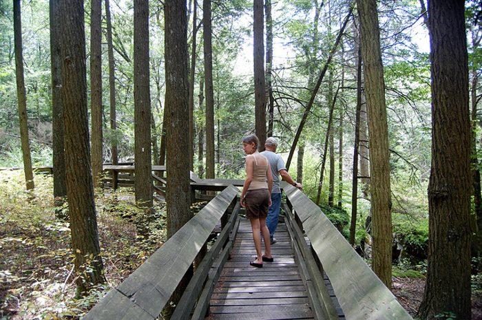 A boardwalk winds through the park, making hiking a little bit easier.