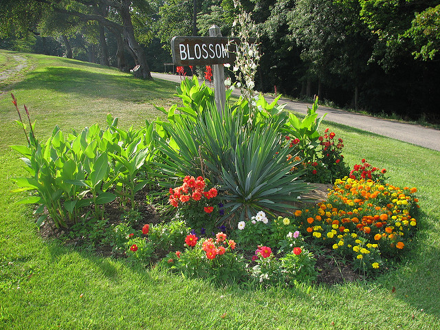 Vibrant flowers dot the landscape, adding an extra burst of cheerfulness to an already lively place.