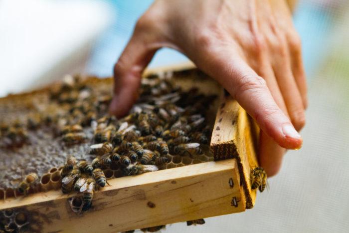3. Big Island Bees