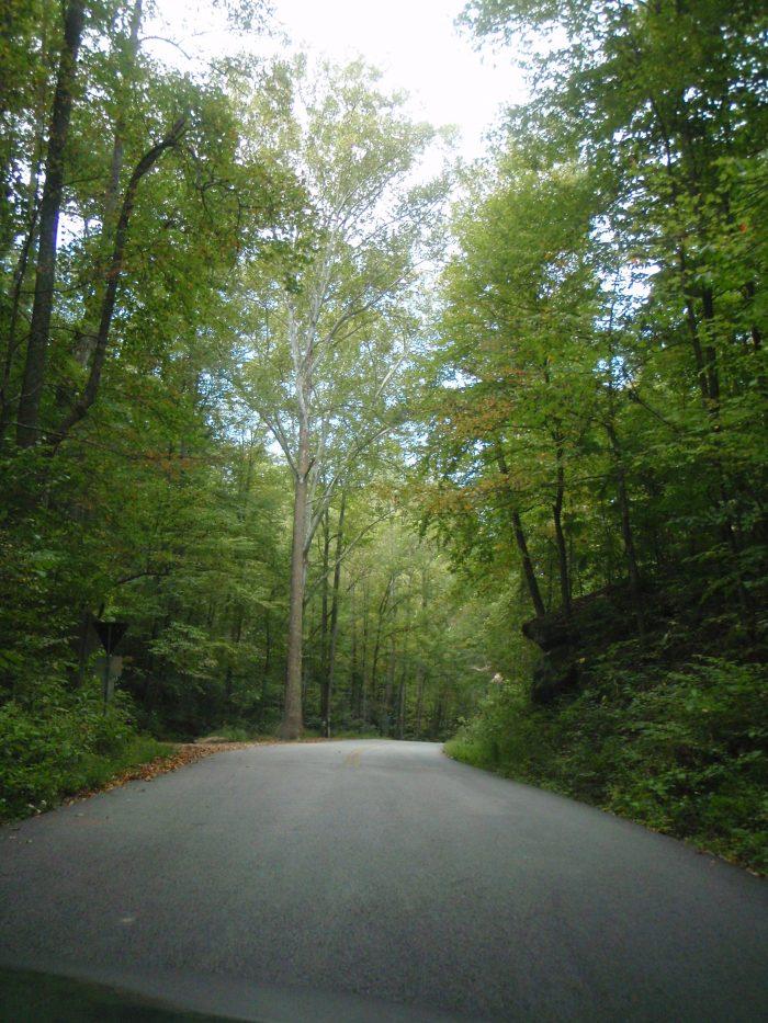 3. Natural shade along the way