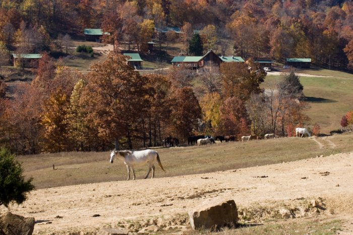 4. Do everything at Horseshoe Canyon Ranch near Jasper.