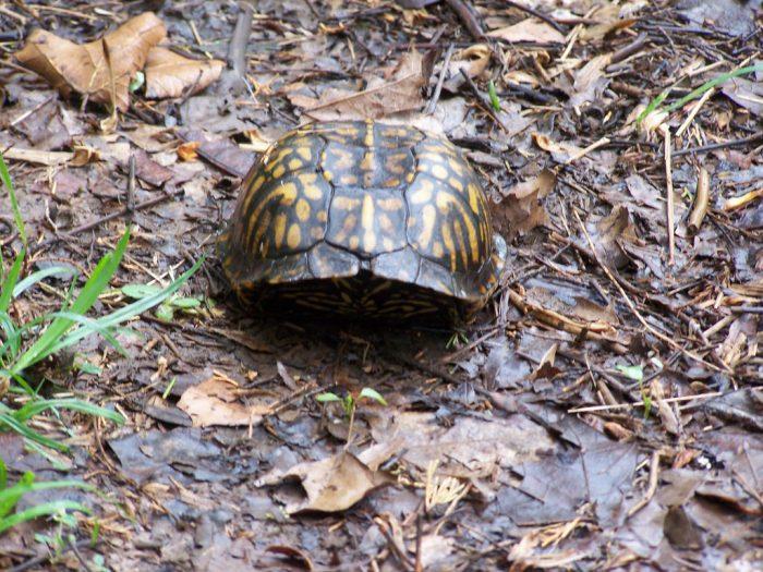 2. Wilderness Trail (The Edge of Appalachia Preserve)