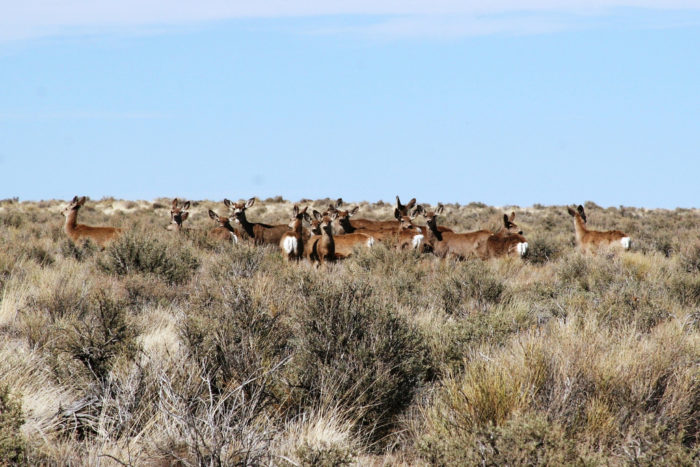 ...And herds of desert wildlife, among other things.