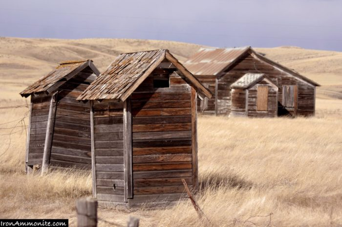 Three outhouses stand on the prairie, abandoned.