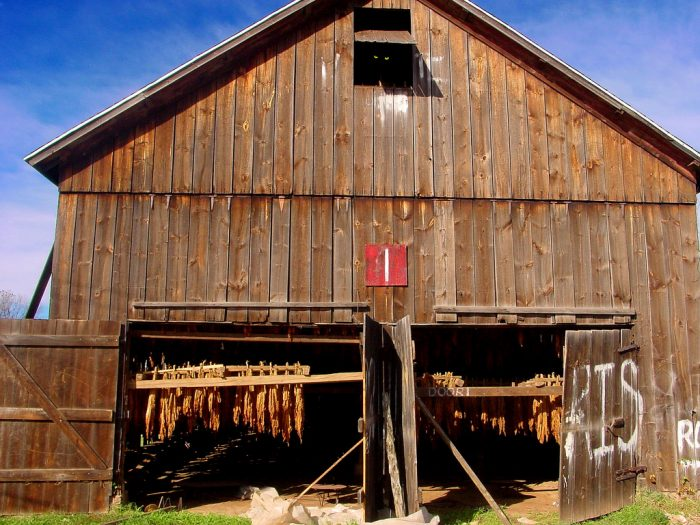 10. This Enfield barn is used for tobacco.