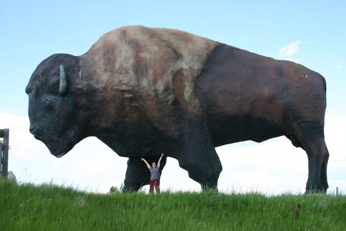 6. Our many 'World's Largest' statues, like the World's Largest Buffalo in Jamestown...