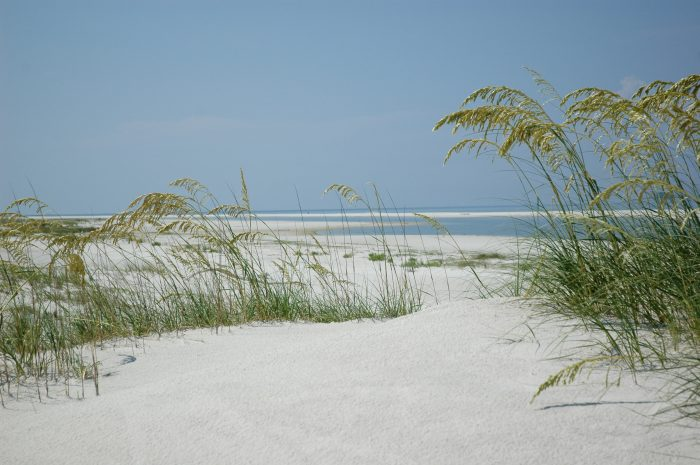 Dauphin Island's white sandy beaches are some of the most beautiful beaches you'll ever set foot on.