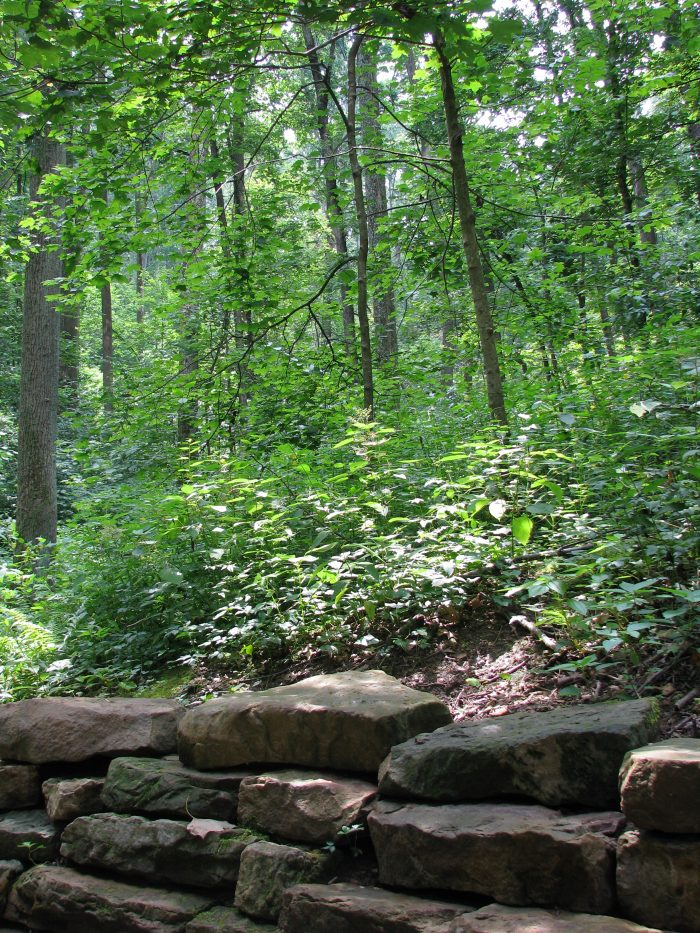 5. Jefferson Memorial Forest— Red Trail
