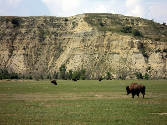 Other scenic overlooks you can visit right from the road  give you an up-close and personal view of wildlife, such as bison or wild horses. Hundreds of other species call the park home, too.