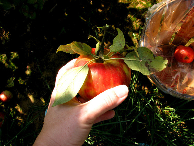9. Picking your own apples, and eating them as you go.