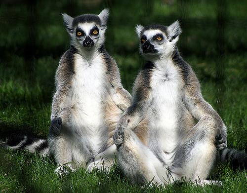 8. Fort Wayne Children's Zoo - Fort Wayne