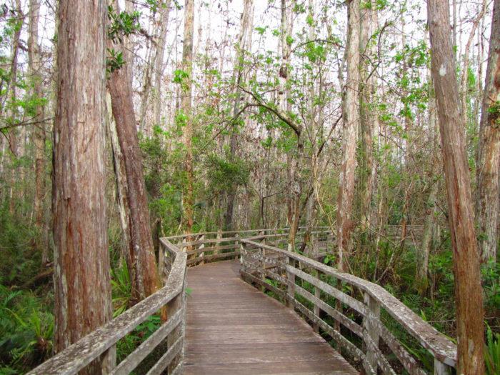 3. Audubon Corkscrew Swamp Sanctuary, Naples