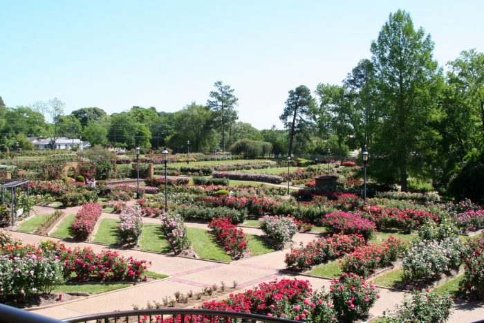 10. Stopping and smelling the roses (literally) at the largest rose garden in the entire country. (Tyler)