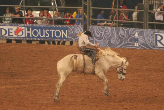 1. Watching cowboys wrangle and wrestle at the biggest rodeo in the world. (Houston)