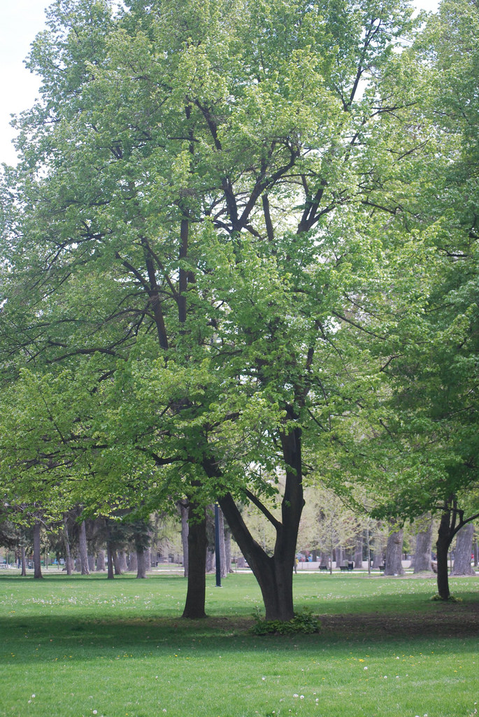 One of the best things about this park is its huge trees, which provide plenty of shade on hot, summer days.