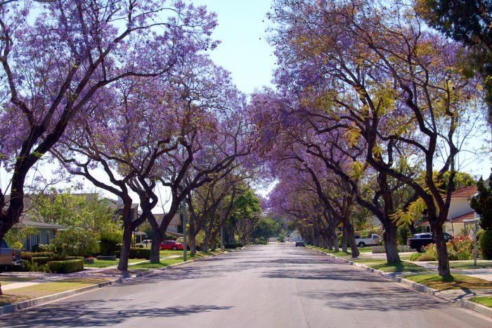 6. Anaheim