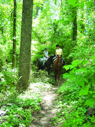 4. Embark on a good ole fashioned trail ride.